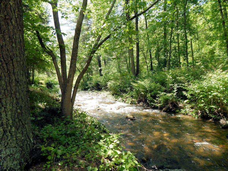 Creek behind Brookside